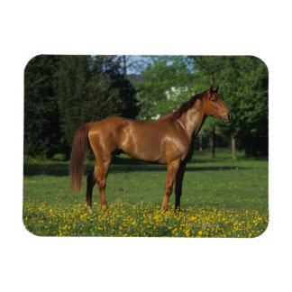 Thoroughbred Horse in Flowers Magnet