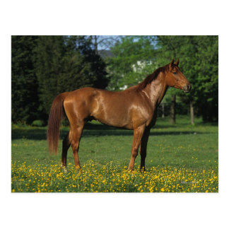 Thoroughbred Horse in Flowers Postcard