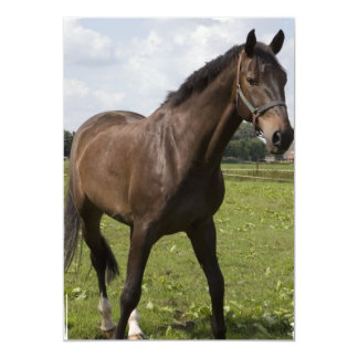 Thoroughbred Horse Invitation