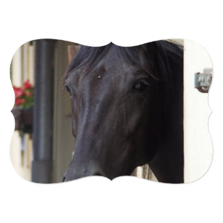 "Thoroughbred Horse 5"" X 7"" Invitation Card"