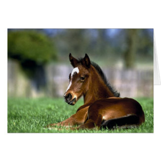 Thoroughbred Horse, Ireland Greeting Card