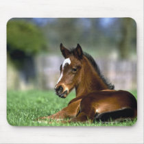 Thoroughbred Horse, Ireland Mouse Pad