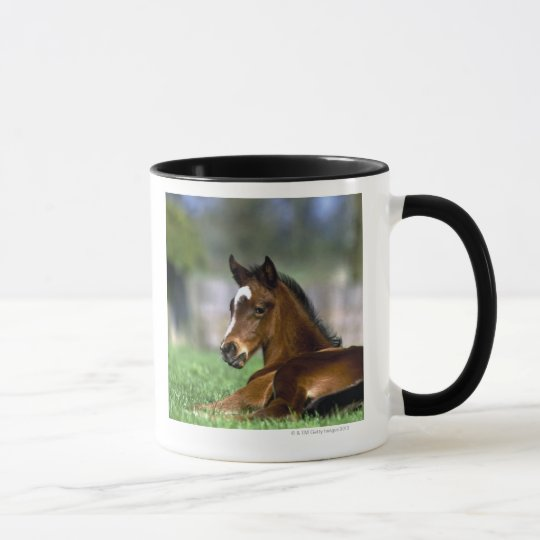 Thoroughbred Horse, Ireland Mug