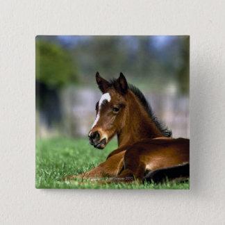 Thoroughbred Horse, Ireland Pinback Button