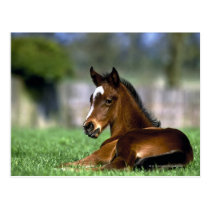 Thoroughbred Horse | Ireland Postcard