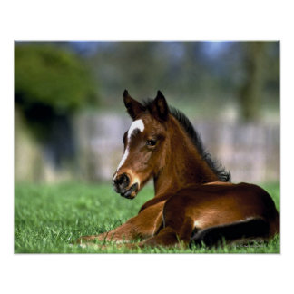 Thoroughbred Horse, Ireland Poster