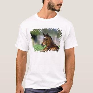 Thoroughbred Horse, Ireland T-Shirt