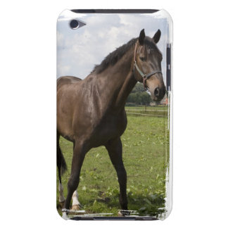 Thoroughbred Horse iTouch Case Barely There iPod Covers