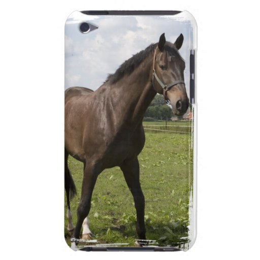 Thoroughbred Horse iTouch Case iPod Case-Mate Case
