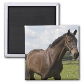 Thoroughbred Horse Magnet Fridge Magnets