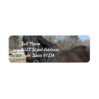 Thoroughbred Horse Mailing Labels