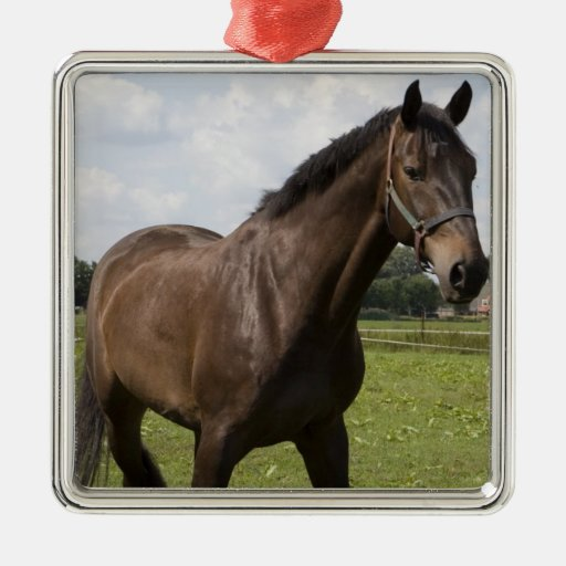 Thoroughbred Horse Ornament
