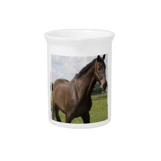 Thoroughbred Horse Pitcher