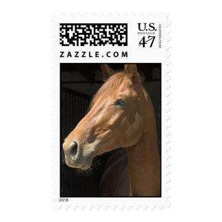 Thoroughbred Horse Postage Stamp