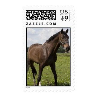 Thoroughbred Horse Postage Stamp