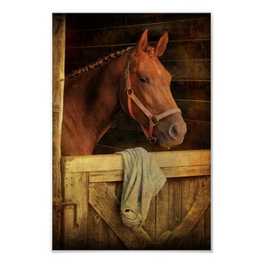 Thoroughbred Horse Poster