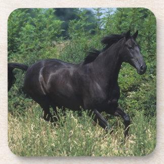 Thoroughbred Horse Running in Grass Coaster
