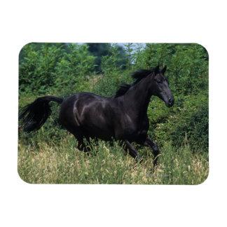 Thoroughbred Horse Running in Grass Magnet