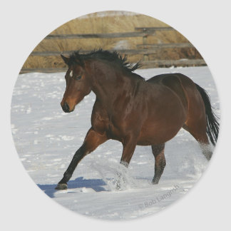 Thoroughbred Horse Running in the Snow Classic Round Sticker