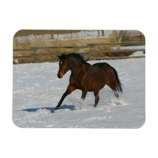 Thoroughbred Horse Running in the Snow Magnet