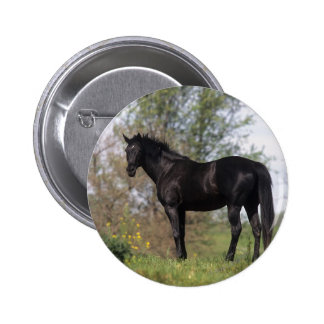 Thoroughbred Horse Standing Button