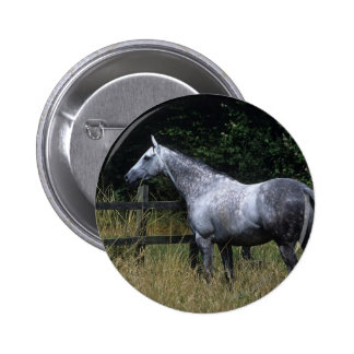 Thoroughbred Horse Standing by Fence Button