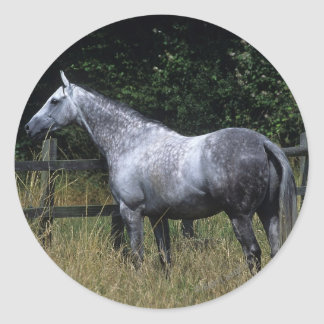 Thoroughbred Horse Standing by Fence Classic Round Sticker