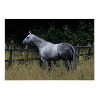 Thoroughbred Horse Standing by Fence Poster