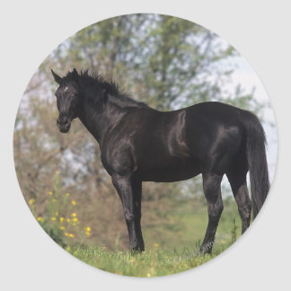 Thoroughbred Horse Standing Classic Round Sticker