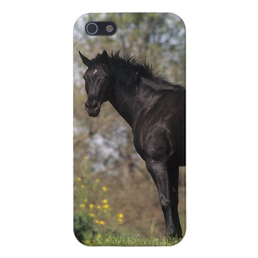Thoroughbred Horse Standing Covers For iPhone 5