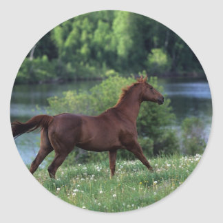 Thoroughbred Horse Standing in Flowers Classic Round Sticker