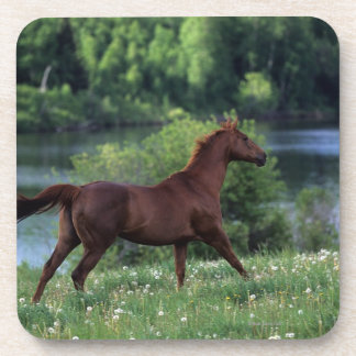 Thoroughbred Horse Standing in Flowers Coaster