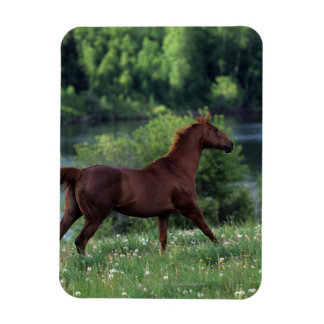 Thoroughbred Horse Standing in Flowers Magnet