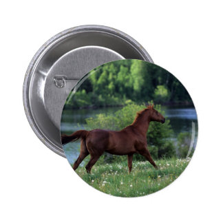 Thoroughbred Horse Standing in Flowers Pinback Button