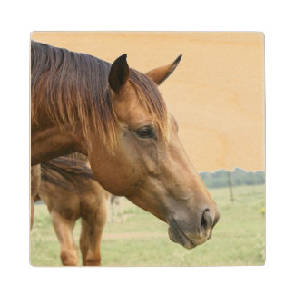 Thoroughbred Horse Wood Coaster