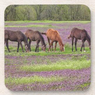 Thoroughbred horses in field of henbit flowers beverage coaster