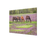 Thoroughbred horses in field of henbit flowers canvas prints