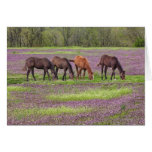 Thoroughbred horses in field of henbit flowers greeting cards