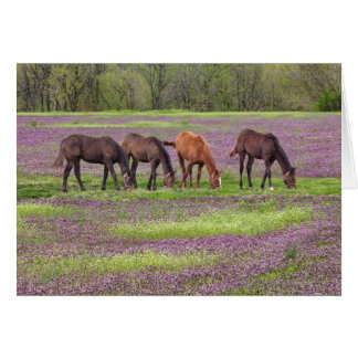 Thoroughbred horses in field of henbit flowers card
