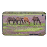 Thoroughbred horses in field of henbit flowers iPod touch covers