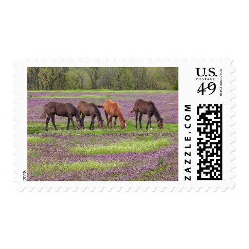 Thoroughbred horses in field of henbit flowers stamp