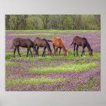 Thoroughbred horses in field of henbit flowers print