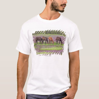 Thoroughbred horses in field of henbit flowers T-Shirt