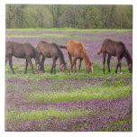 Thoroughbred horses in field of henbit flowers large square tile