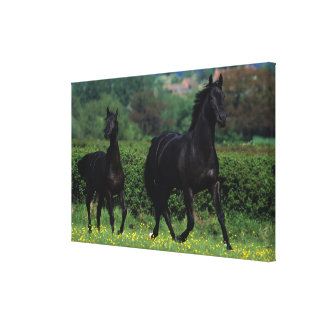 Thoroughbred Horses in Flower Field Canvas Print