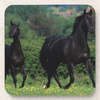 Thoroughbred Horses in Flower Field Coaster