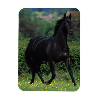 Thoroughbred Horses in Flower Field Magnet