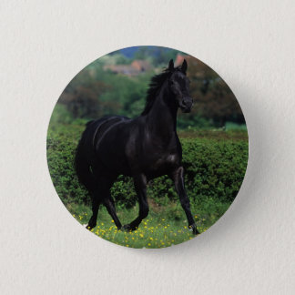 Thoroughbred Horses in Flower Field Pinback Button