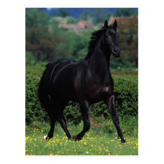 Thoroughbred Horses in Flower Field Postcard