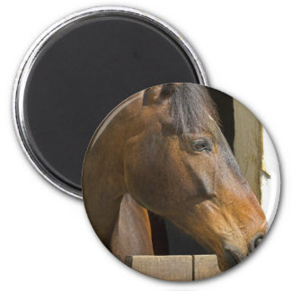 Thoroughbred Horses Magnet Magnet